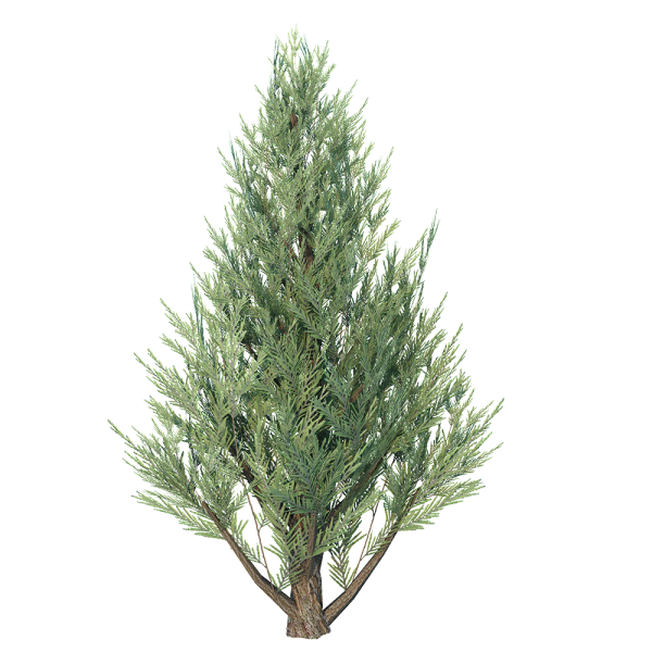 Juniper_Tree_1.png