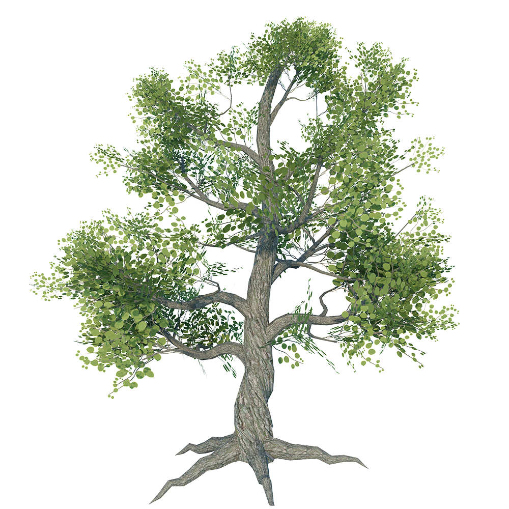 Larg_Tree_1.png