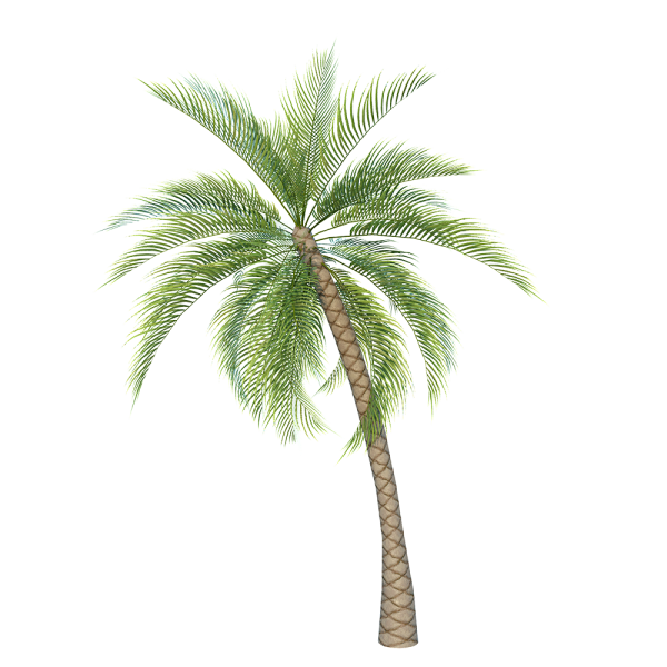 Palm_Tree_1.png